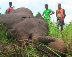 7 Elephants Electrocuted In Odisha: Govt &Opposition Indulge In Blame Game