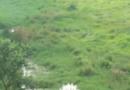 নিরানন্দ আনন্দ